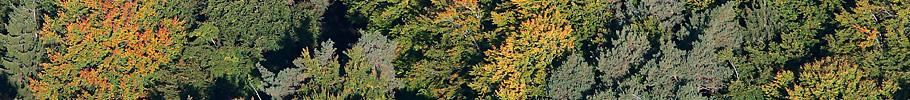Luftaufnahmen Muster und Flächen Bern